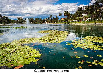 angeles, parque, almohadillas, eco, los, lago, lirio, california.