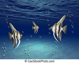 angelfish - angel fish on the seabed