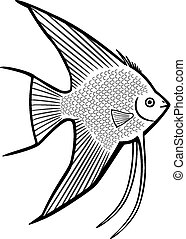 Angelfish - vector line art of a tropical angelfish,...