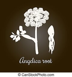 Angelica or archangelica or dong quai, or female ginseng - medicinal herb. White Silhouette. Flower and root. Botanical vector illustration. for essential oil, cosmetics, health care, perfume , label