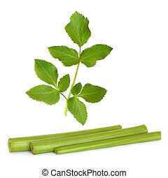 Angelica herb leaf and stems, isolated over white background.