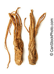 Angelica sinensis on a white background