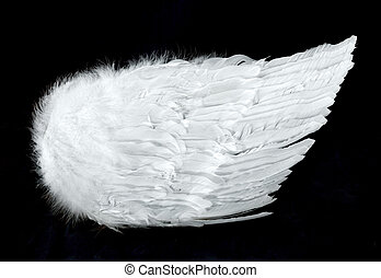 angelo, isolato, lato, nero, ali, vista