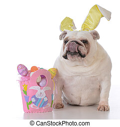 angezogene, Ostern, hund, Auf