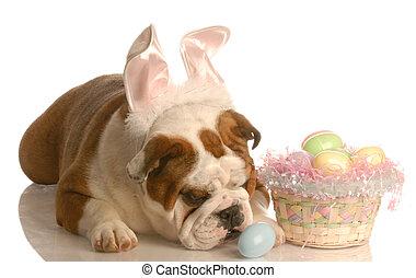 angezogene , ostern, hund, kaninchen