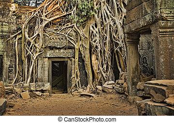 Angkor Wat - Ficus Strangulosa tree growing over a doorway...