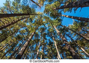 angle, bas, arbres, vue
