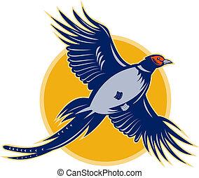 angle., fazant, vliegen, laag, vogel, bekeken