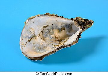 angle view oyster shell on blue background close up