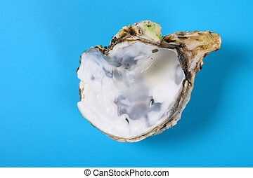 angle view oyster shell on blue background