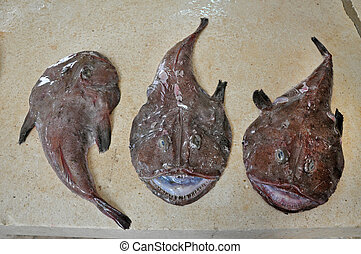 Angler fish on fish market