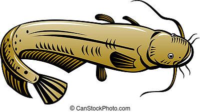 angolo alto, pesce gatto