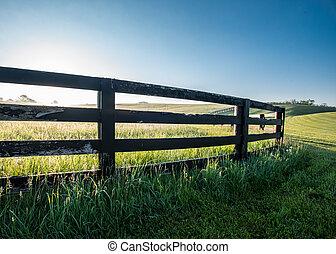angolo basso, di, cavallo, fattoria, recinto
