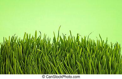 angolo, primavera, sopra, su, verde, basso, chiudere, fresco, erba
