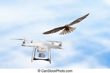 angrepp, örn, mid-air, flygning, drönare