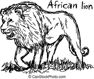 angry african lion walking - vector illustration sketch hand drawn with black lines, isolated on white background