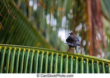 Angry bird on a palm tree branch