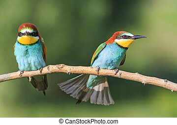 angry birds on a branch