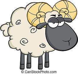 Angry Black Head Ram Sheep