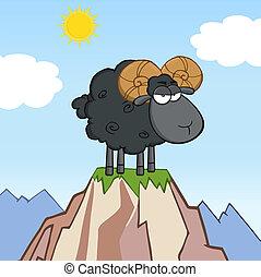 Angry Black Ram Sheep