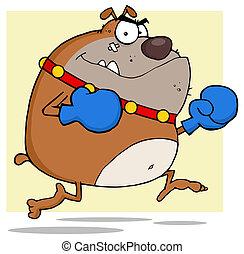 Angry Bulldog Boxer