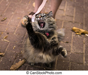 angry cat roaring while trying to catch a pink ribbon