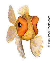 Angry goldfish - A cartoon goldfish looking very angry.