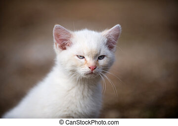 angry kitten - Small white kitten with angry look on its...