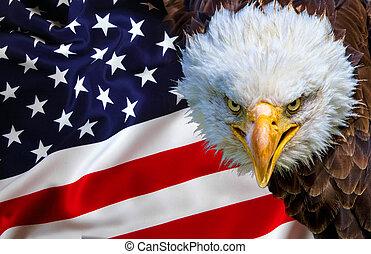Angry north american bald eagle on american flag