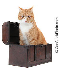 angry tomcat in treasure chest