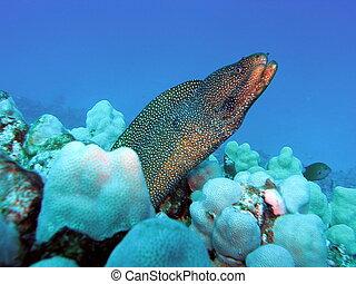 anguila, relajado, amigo