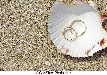anillos, dos, concha marina