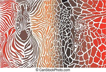 animální, grafické pozadí, o, zebra, žirafa