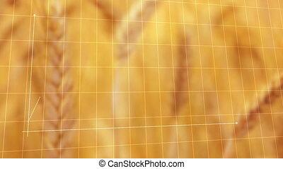 animé, blé, diagramme, rendement