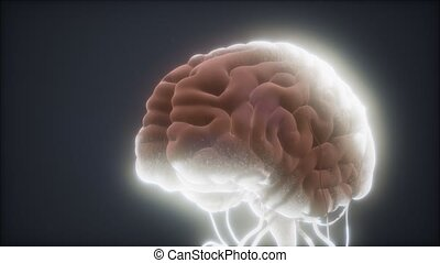 animé, humain, modèle, cerveau