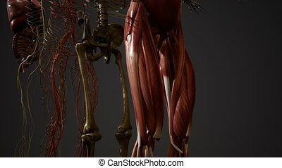 animé, illustration, anatomie, 3d, humain
