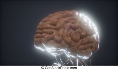 animé, modèle, cerveau, humain