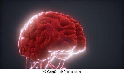 animé, modèle, cerveau humain