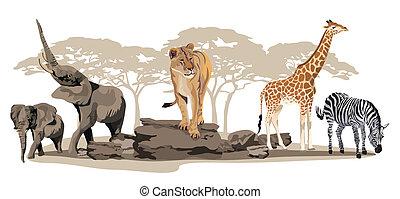 animais, africano