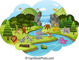 animais, cena, floresta