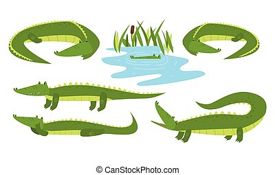 animais, engraçado, crocodilo, bom, sentimento, pântano, vivendo