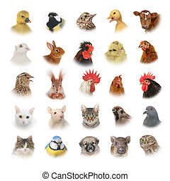 animais, pássaros