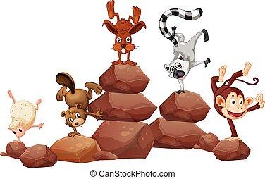animais, pedras