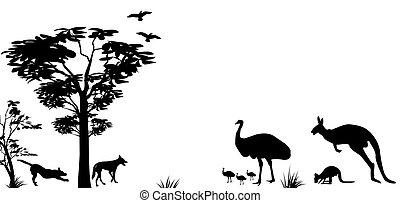 animais selvagens, de, austrália, canguru, e, dingos