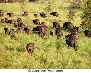 animais selvagens, em, áfrica