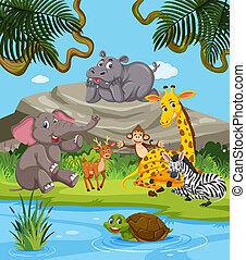 animais selvagens, natureza