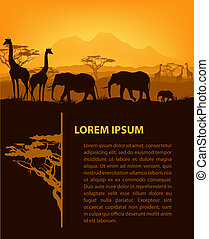 animais, silhuetas, pôr do sol, modelo, africano, desenho