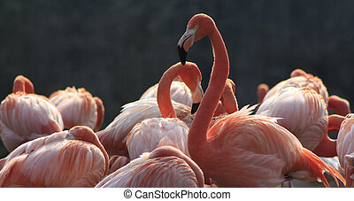 Animal - a group of flamingo in summer on a small lake