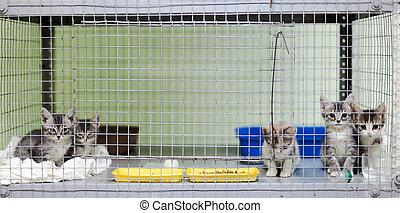 animal, abri, cage, chatons
