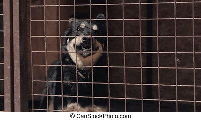 animal, abri, -, chien, cabot, sdf, blck, cage